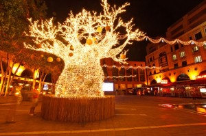 The Christmas Baobab Tree at Nelson Mandela Square in Sandton, Johannesburg.